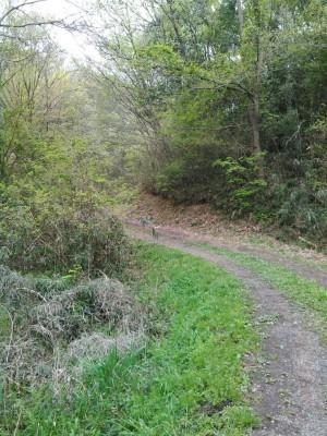 池田公園への道
