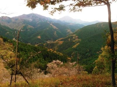 桜山公園の展望台